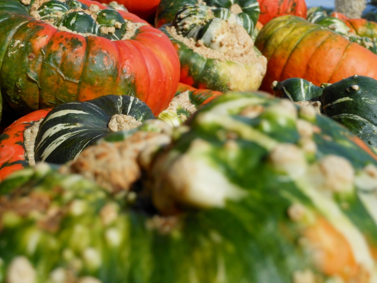 A Pumpkin Bonanza at Switzerland's Jucker Farm